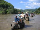 Elephant tour in the river in Thailand Stock Photos