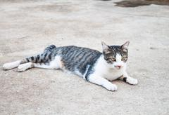Young cat laying relax in home field Stock Photos