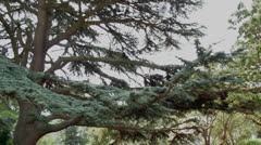 Tree in the park Stock Footage