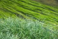 Stock Photo of wetland with creek  and grass