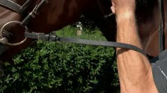 Horse bridle Stock Footage
