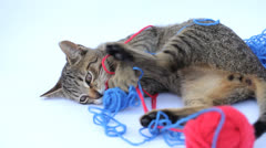 Playful cat Stock Footage