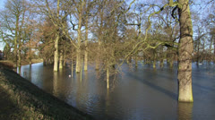 Oak trees in flood, due to high water level in river IJssel, The Netherlands Stock Footage
