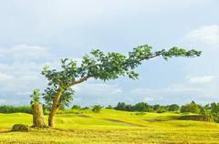 Bent tree Stock Photos