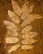 The imprint leaf on cement floor Stock Photos