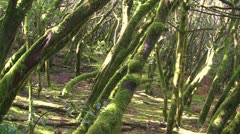 La Gomera Forest Stock Footage