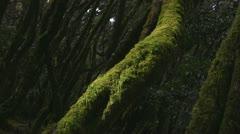 La Gomera Forest Stock Footage