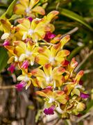 the beautiful orchid - stock photo