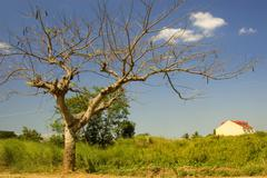 leafless tree - stock photo