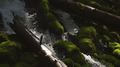 Water cascades amongst mossy rocks and logs Stock Footage