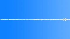 Pajaro Bosque Bird Jungle(loop) Sound Effect