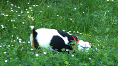 Friction in the Grass Dog Stock Footage