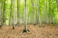 green trees - stock photo