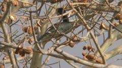 Bird in tree. Niassa Reserve, Mozambique. Stock Footage