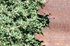Sheet rusty zinc on grass Stock Photos
