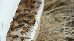 Bees at Hive Entrance Stock Footage