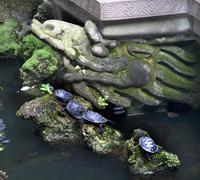Kilpikonnia temppelin puutarha Baoguang si paistaa aarre buddhalainen temp Kuvituskuvat