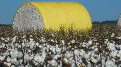 Cotton bale in the middle of a cotton field Stock Footage