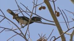 Bird in tree, listening. Niassa Reserve, Mozambique. Stock Footage