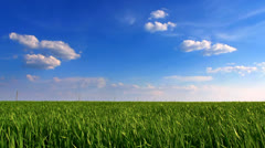 Blue sky and grass field Stock Footage