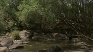 Stock Video Footage of river pond with stream in Niassa Reserve, Mozambique.