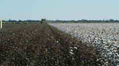 Cotton farm Stock Footage