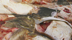 Pile of Dead Fish Filleted and Gutted in Dumpster Stock Footage