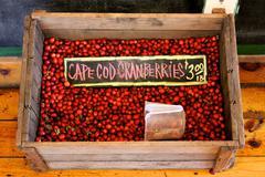Cape Cod Cranberries Kuvituskuvat