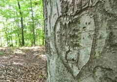 heart carved into a tree - stock photo