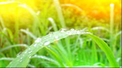 Dew drops on leaves and sun Stock Footage