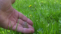 Baby frog is back to its natural habitat - stock footage