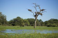 Nested Tree in South African Dam of Water Stock Photos