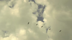 Bird formation in the clouds Stock Footage