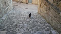 Chasing cat on cobblestones Stock Footage