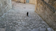 Stock Video Footage of Chasing cat on cobblestones