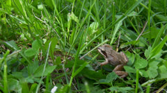 Little frog jumps out of frame Stock Footage