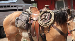 Buckskin pony Horse waiting for a rider. Stock Footage