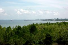 Stock Photo of views of the sea and mangrove from the top of the hill