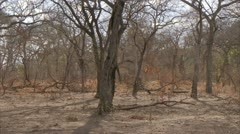 Quiet atmosphere in Niassa Reserve, Mozambique. - stock footage
