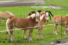 Herd of horses of various colors in the mountains of Italy. Stock Photos