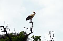 Stork's nest - stock photo
