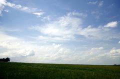 green meadow. - stock photo