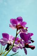 Orchid flowers against a background of blue sky Stock Photos