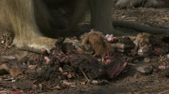 Medium close-up of meat and bones. Niassa Reserve, Mozambique. Stock Footage