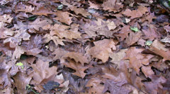 Leaf covered ground high viewpoint panning Stock Footage