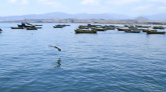 Sea lions in the harbour Stock Footage