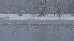 Zagreb, jarun lake, winter time Stock Footage