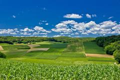 Beautiful green agricultural landscape in croatia Stock Photos