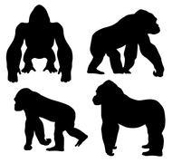 Gorilla Piirros