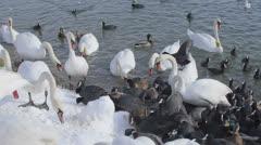 Lot of birds, Zagreb, Jarun lake Stock Footage